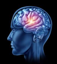 spark of genius brain